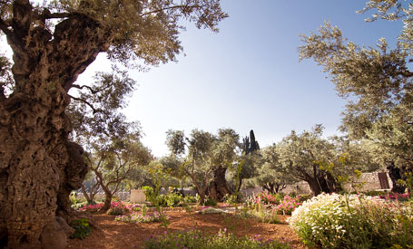 Garden Of Gethsemani And Mount Of Olives